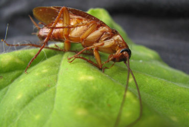 cockroach-89067